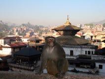 尼泊尔pashupatinath 库存照片