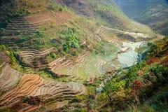尼泊尔ricefields 免版税图库摄影