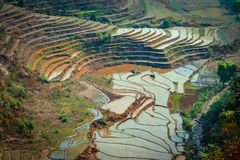 尼泊尔ricefields 库存图片