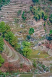 尼泊尔ricefields 库存照片