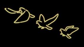 尼罗光鸽子黑色白色 免版税库存照片