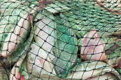 尼罗在网的罗非鱼鱼 免版税库存图片
