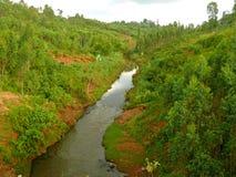 尼罗河由森林围拢了。风景自然。非洲, Ethio 图库摄影