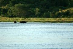 尼罗河, Murchison Falls NP,乌干达,非洲 库存照片