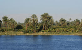 尼罗河 库存图片