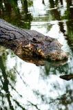 尼罗鳄鱼湾鳄niloticus在水中,鳄鱼头的特写镜头细节有开放眼睛的 鳄鱼头关闭 库存图片