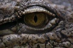 尼罗鳄鱼的眼睛 库存照片