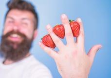 尽管甜口味莓果包含零的糖 供以人员胡子在手指蓝色背景之间的行家草莓 库存照片