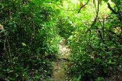 尾巴在泰国的森林里 库存图片