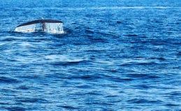 尾巴驼背鲸与的水飞溅下落 免版税库存照片