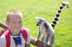 尾部有环纹男孩的狐猴 免版税库存图片