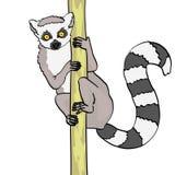 尾部有环纹的狐猴 背景剪报查出的对象路径白色 在竹子,木头分支的动物猫狐猴  向量 库存例证