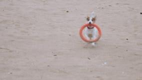 尾随与一个玩具的戏剧在海滩 股票视频