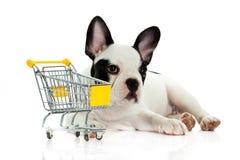 尾随与在白色背景隔绝的购物台车的法国牛头犬 免版税库存图片