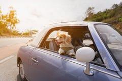 尾随享受与葡萄酒汽车颜色紫色的乘驾在罗阿 库存图片