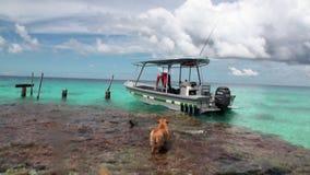 尾随伴游一个人对在一条小船的一次旅行在海洋 股票录像