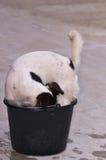 尾随充分变冷在一个桶用水 图库摄影