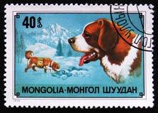 尾随品种圣伯纳德狗,山resque狗,大约1978年 库存图片