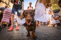 尾随在每年第22次达克斯猎犬游行的党 免版税库存图片