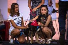 尾随在每年第22次达克斯猎犬游行(Marsz Jamnikow)的党在主要集市广场 库存照片
