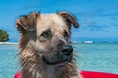 尾随在热带水晶玻利尼西亚海背景的画象 图库摄影
