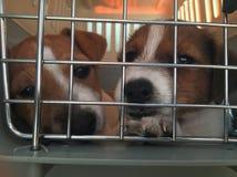 尾随在笼子的小狗 免版税库存图片