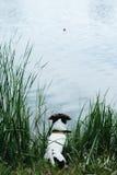 尾随在远处坐河岸和神色 库存照片