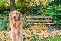 尾随坐在秋天场面、叶子和长凳 免版税库存图片