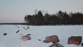 尾随大杉木森林围拢的冻湖步行冬天forestAerial视图盖用雪在冬天 股票视频