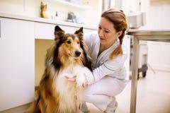 尾随患者的欢迎在审查前在宠物诊所 库存图片