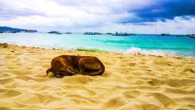 尾随愉快睡觉在海滩反对绿松石海和暴风云的背景 库存图片