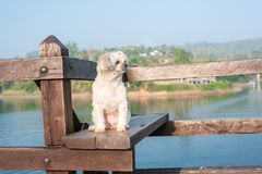 尾随愉快,当假期旅行在木桥 库存照片