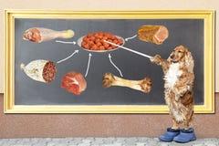 尾随指向黑板他喜爱的食物 库存图片