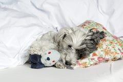 尾随睡觉在与枕头和长毛绒玩具的床上 库存图片