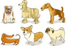 尾随纯血统的动物 库存例证