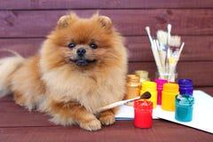 尾随艺术家美丽的pomeranian狗与油漆和掠过在木背景 聪明的波美丝毛狗 免版税库存图片