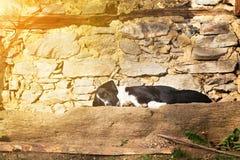 尾随说谎的睡觉在一个石大阳台在阳光下 库存图片