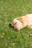 尾随躺下在草和小睡 库存图片