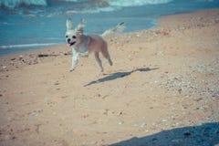 尾随那么逗人喜爱的旅行在海滩,米黄颜色 免版税库存图片