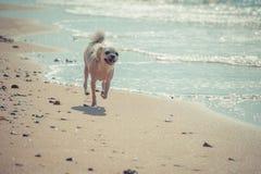 尾随那么逗人喜爱的旅行在海滩,米黄颜色 图库摄影
