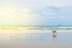 尾随那么逗人喜爱的旅行在海滩,米黄颜色 库存图片