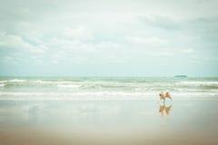 尾随那么逗人喜爱的旅行在海滩,米黄颜色 免版税图库摄影