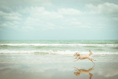 尾随那么逗人喜爱的旅行在海滩,米黄颜色 免版税库存照片