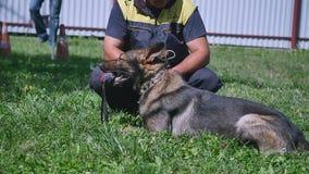 尾随防御,与掠夺物的狗在嘴 股票录像