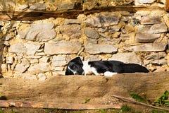 尾随说谎的睡觉在一个石大阳台在阳光下 免版税库存图片