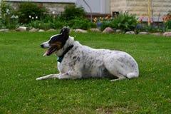 尾随lounging在豪华的绿草在春日 库存图片