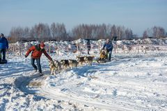 尾随sledding在节日冬天乐趣在Uglich, 10 02 2018年寸 免版税图库摄影