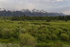 黑尾巴在背景中筑成池塘与盛大Tetons 图库摄影