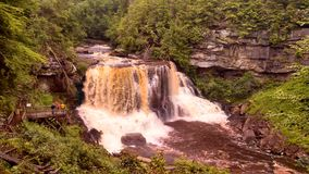 黑尿病迪维斯在西方柔滑的平稳的virgina弗吉尼亚的水附近的秋天图标 免版税库存图片