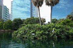 居住和兴旺在一个城市环境的鸟 库存照片